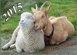 коза и овца обл